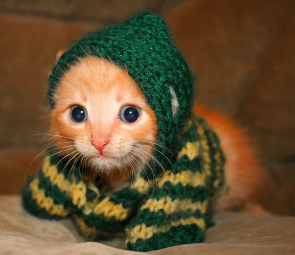 Adorable Kitten In A Hooded Sweater