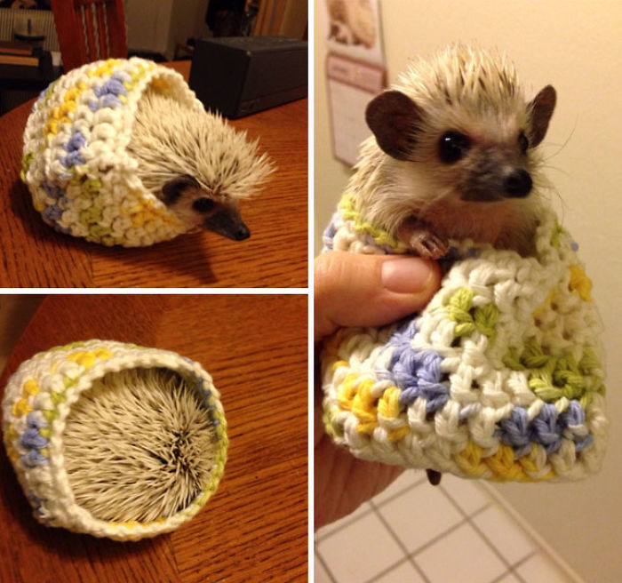 My Friend Knit My Hedgehog A Sweater
