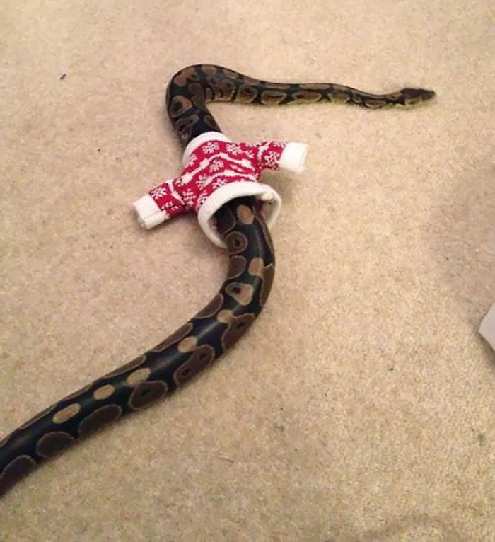 Sweater For A Snake