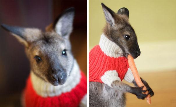 Do-Do Huckabee In A Sweater