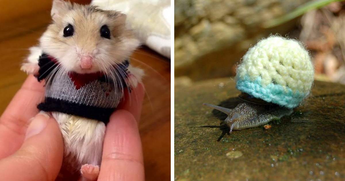 Tiny Animals In Tiny Sweaters That Will Make You Go Aww - 22 adorable animals wearing miniature sweaters