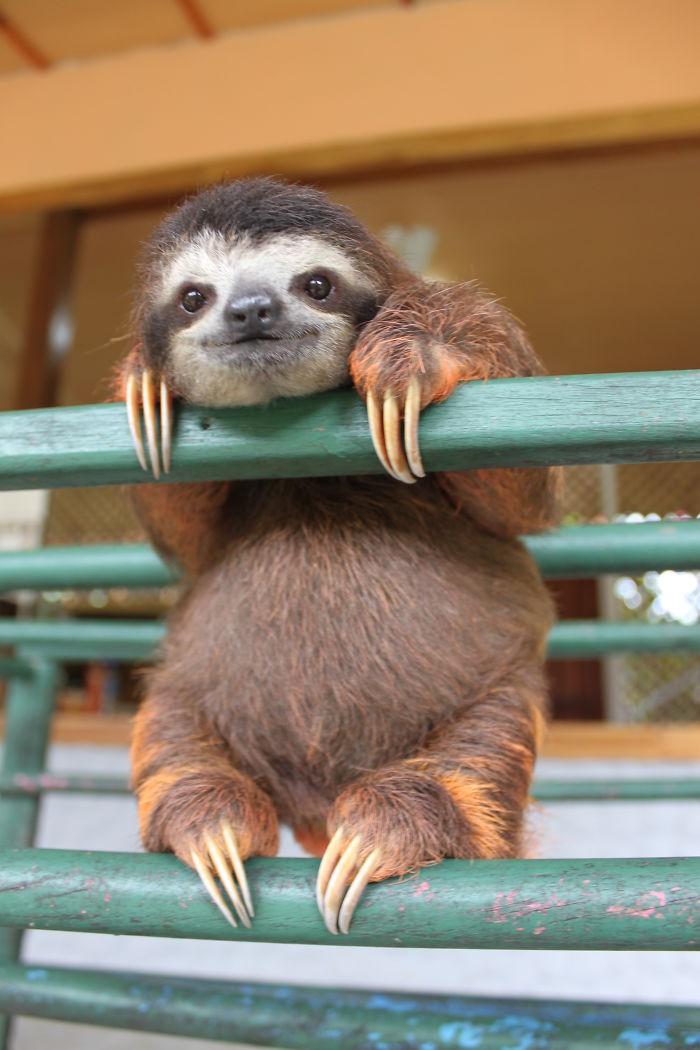 Cute-sloths
