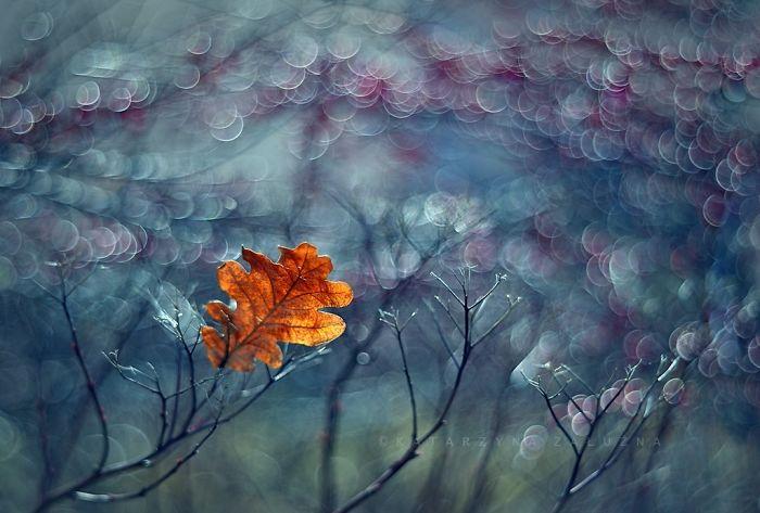 My Impressionist Photos Of Autumn In Poland