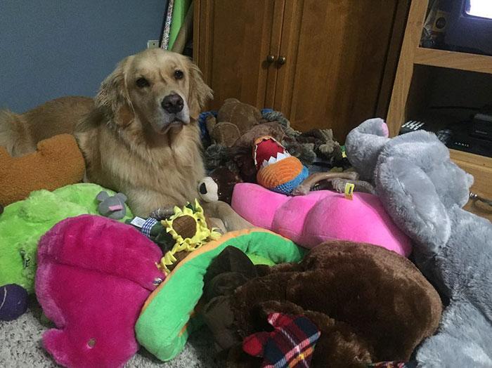 dog-brings-toys-mojito-10