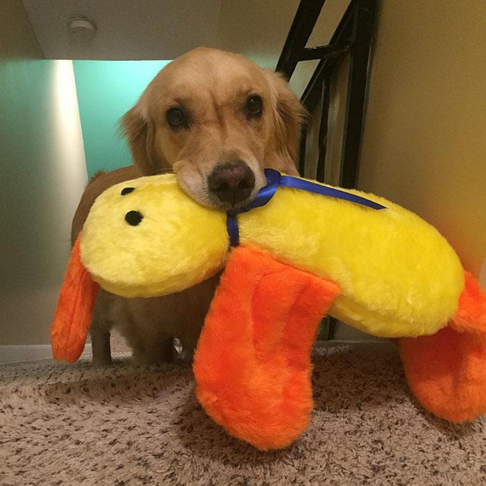 dog-brings-toys-mojito-12
