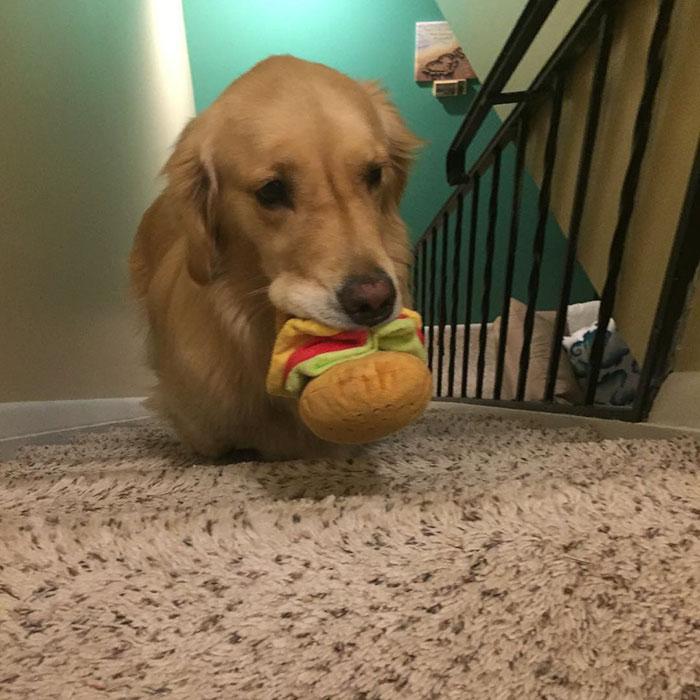 dog-brings-toys-mojito-17