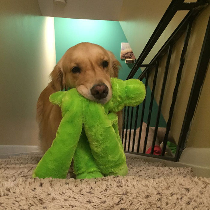 dog-brings-toys-mojito-2
