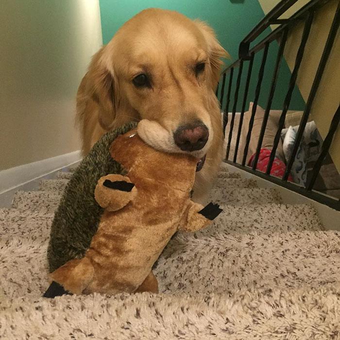 dog-brings-toys-mojito-5