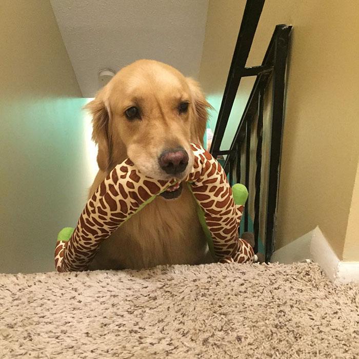 dog-brings-toys-mojito-7