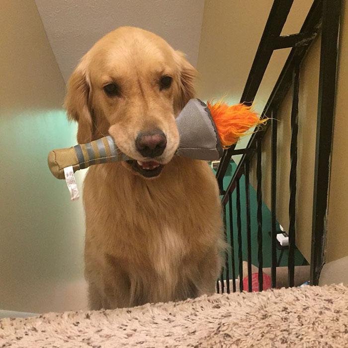 dog-brings-toys-mojito-9