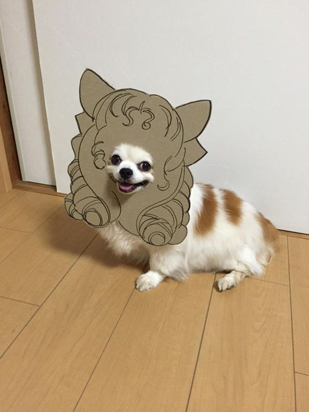 Cardboard Costume & Japanese Woman Creates Hilarious Cardboard Cutouts With Her Dog (10+ ...