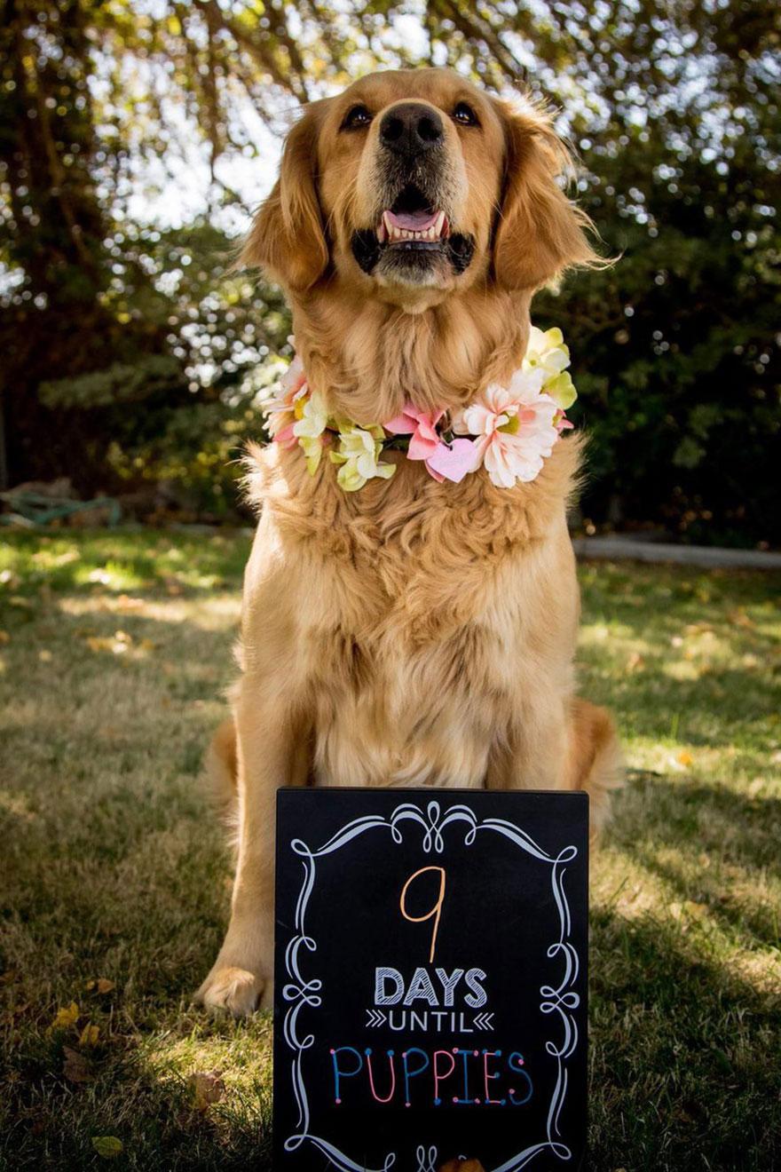 dog-maternity-photo-shoot-chanel-kennedy-sorensen-2