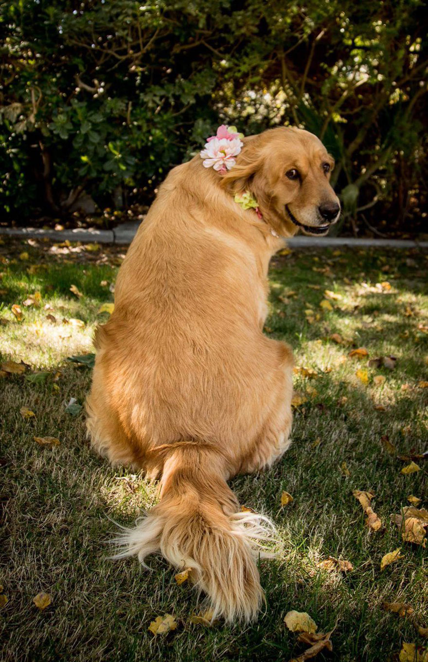 dog-maternity-photo-shoot-chanel-kennedy-sorensen-3