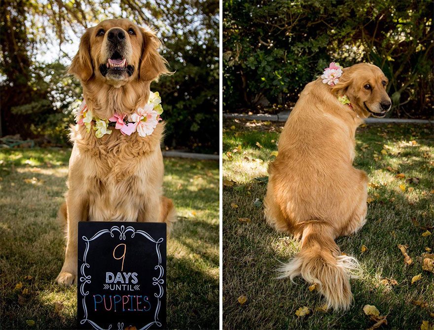 dog-maternity-photo-shoot-chanel-kennedy-sorensen-6