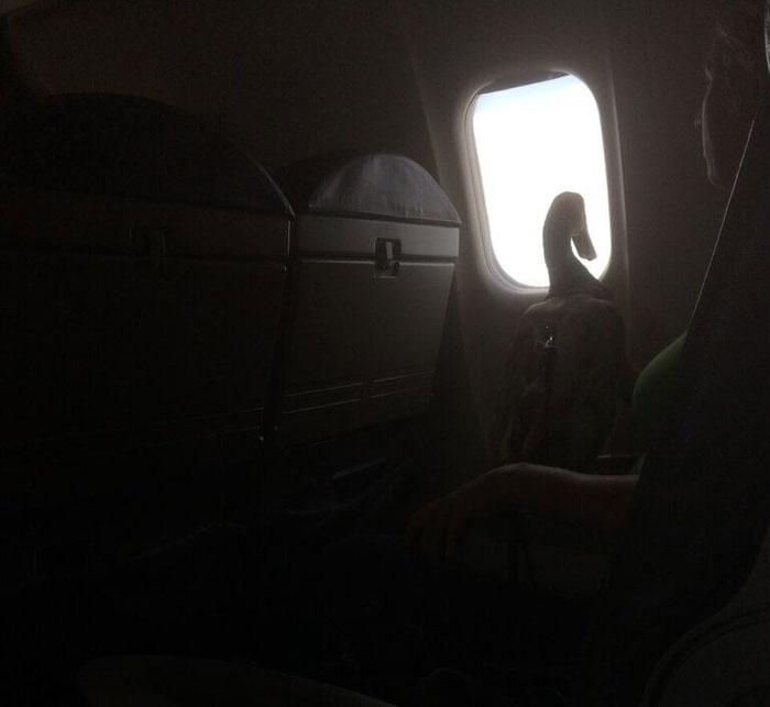 emotional-support-duck-flight-9