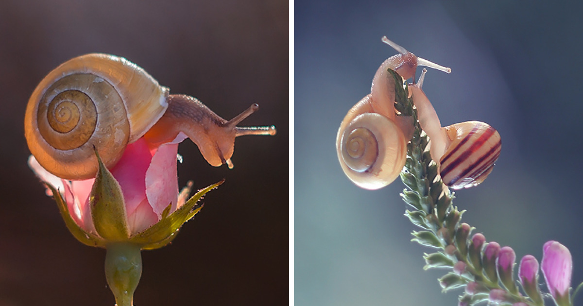 I Photographed Fairy-Tale World Of Snails In Poland
