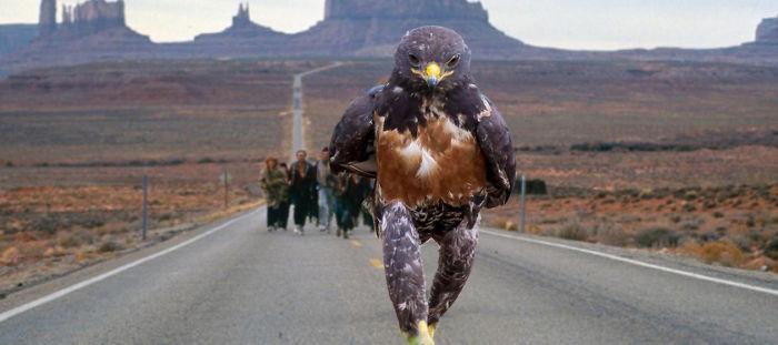 Forrest Hawk