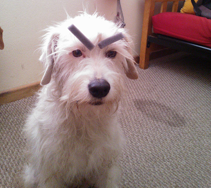 Don't Pet Me. I'm Upset