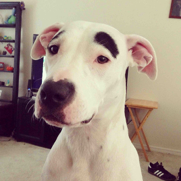 My Dog Has Eyebrows, Always Has