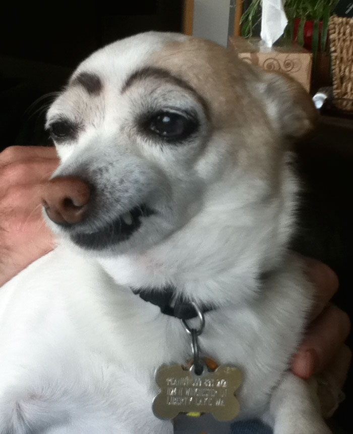 Original Eyebrow Dog