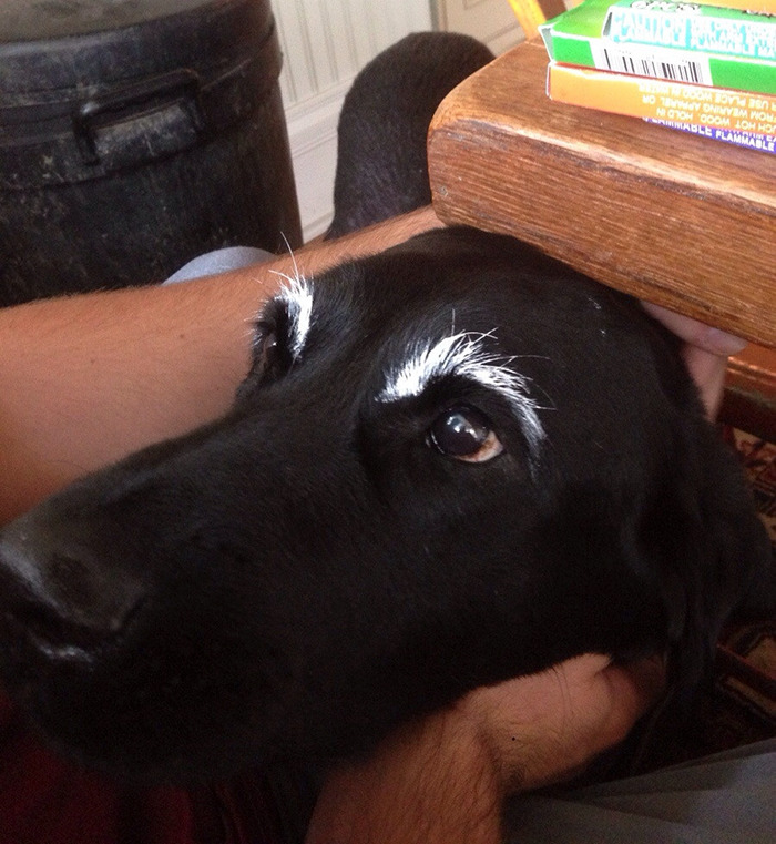 This Is My Dog With Eyebrows