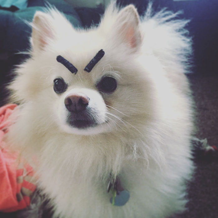 I Gave My Dog Eyebrows!
