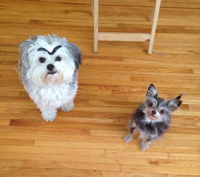 My Dogs With Eyebrows
