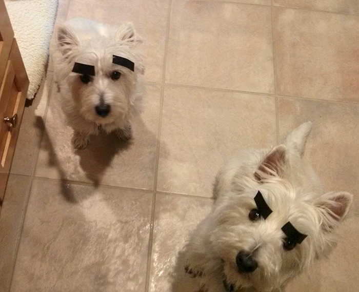 Got Bored. Gave The Dogs Eyebrows