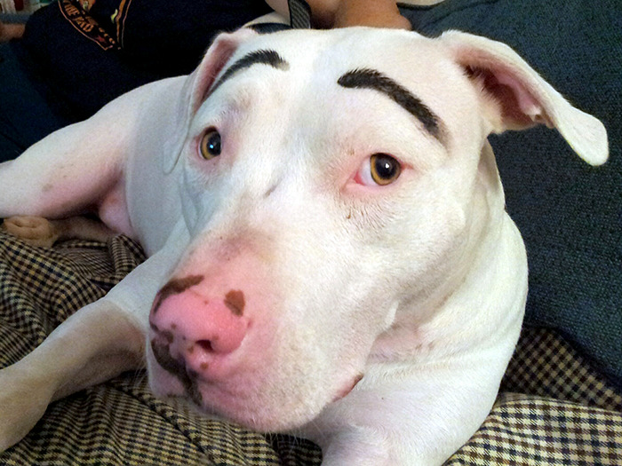 My Dog With Eyebrows