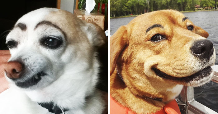 10+ Dogs With Eyebrows