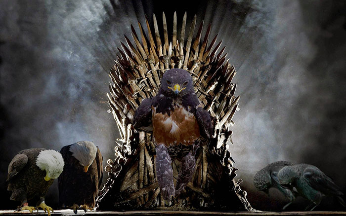 His Throne