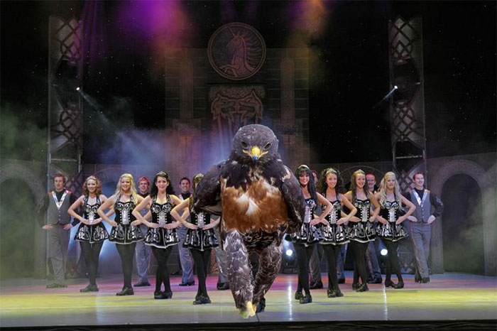 Bird Of The Dance