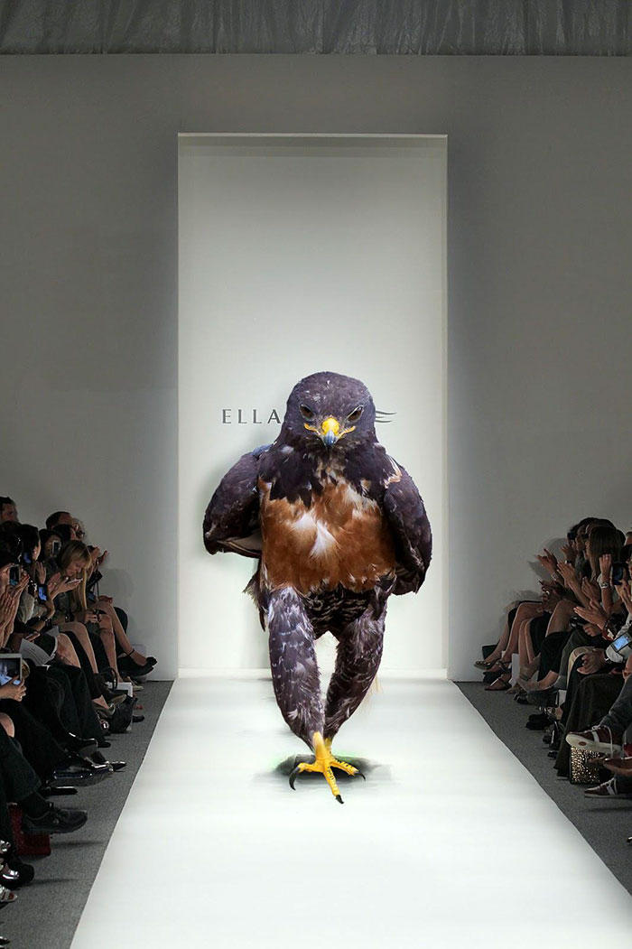 Too Sexy For This Runway
