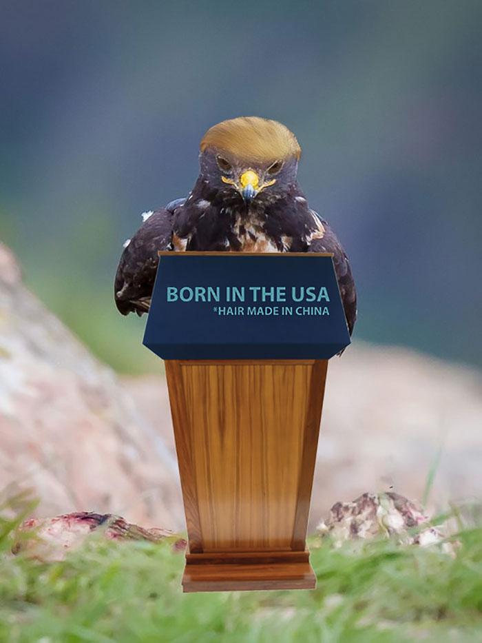 Trump Hawk
