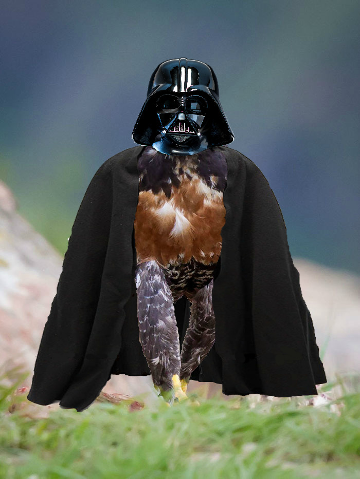 I Find Your Lack Of Feathers Disturbing.