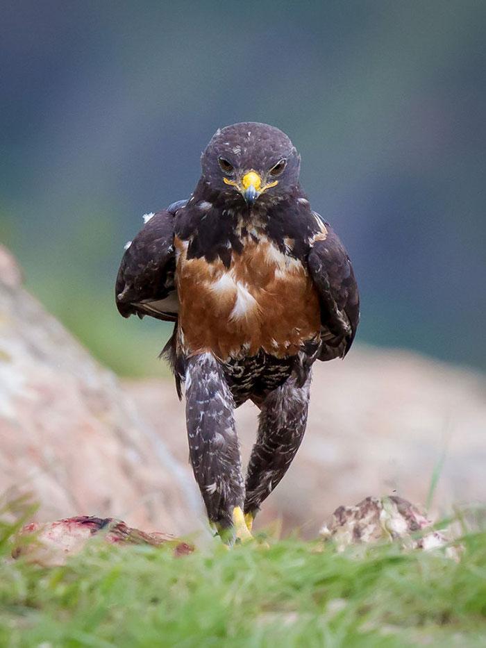 [Image: funny-hawk-photoshop-battle-61.jpg]
