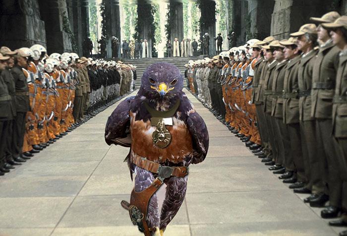 A Real Millennium Falcon
