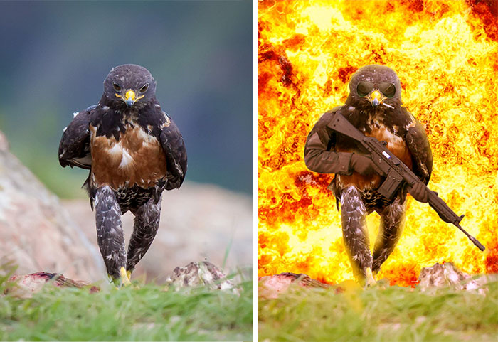 This Badass Hawk Just Sparked The Most Intense Photoshop Battle Ever (10+ Pics)
