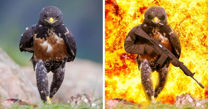This Badass Hawk Just Sparked The Most Intense Photoshop ...