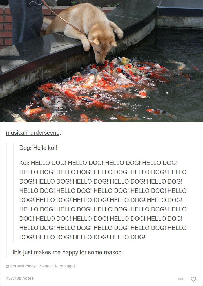 Funny Animals