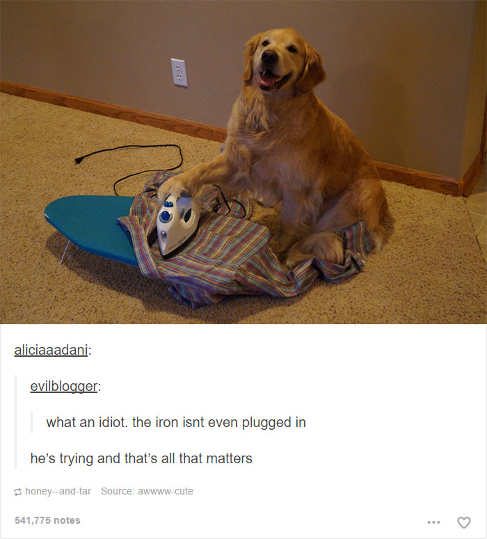 15+ Animal Posts On Tumblr That Are Impossible Not To