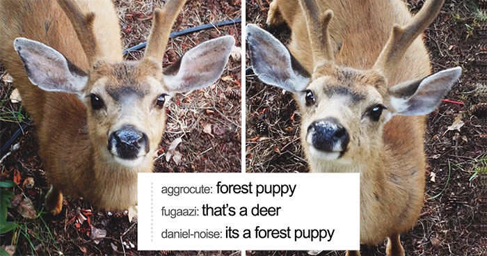 15+ Animal Posts On Tumblr That Are Impossible Not To Laugh At