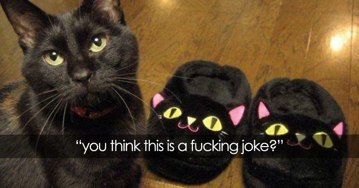 64 Animal Posts On Tumblr That Are Impossible Not To Laugh