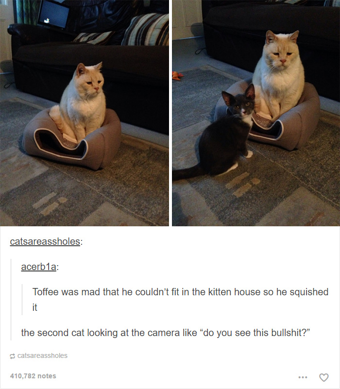60 Cat Posts On Tumblr That Are Impossible Not To Laugh At Bored Panda