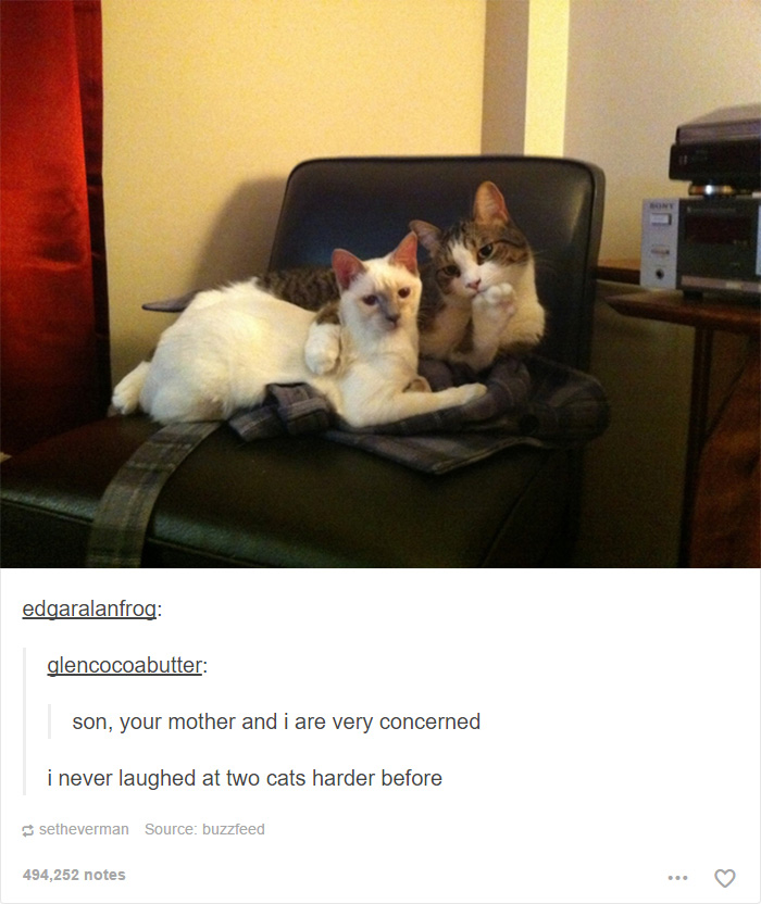 Funny Cat Meme Tumblr : Cat posts on tumblr that are impossible not to laugh