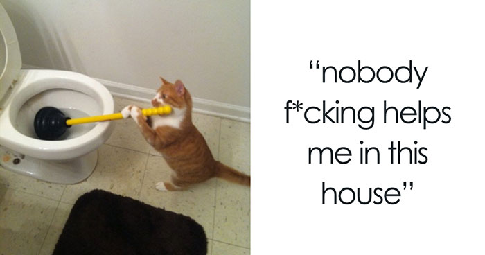 60 Cat Posts On Tumblr That Are Impossible Not To Laugh At