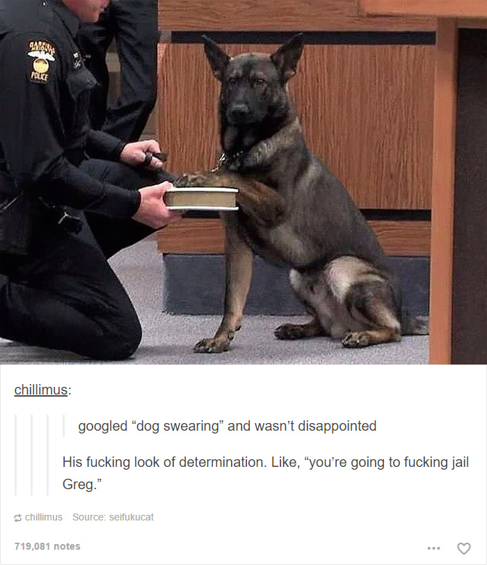 109 Dog Posts On Tumblr That Are Impossible To Get Through