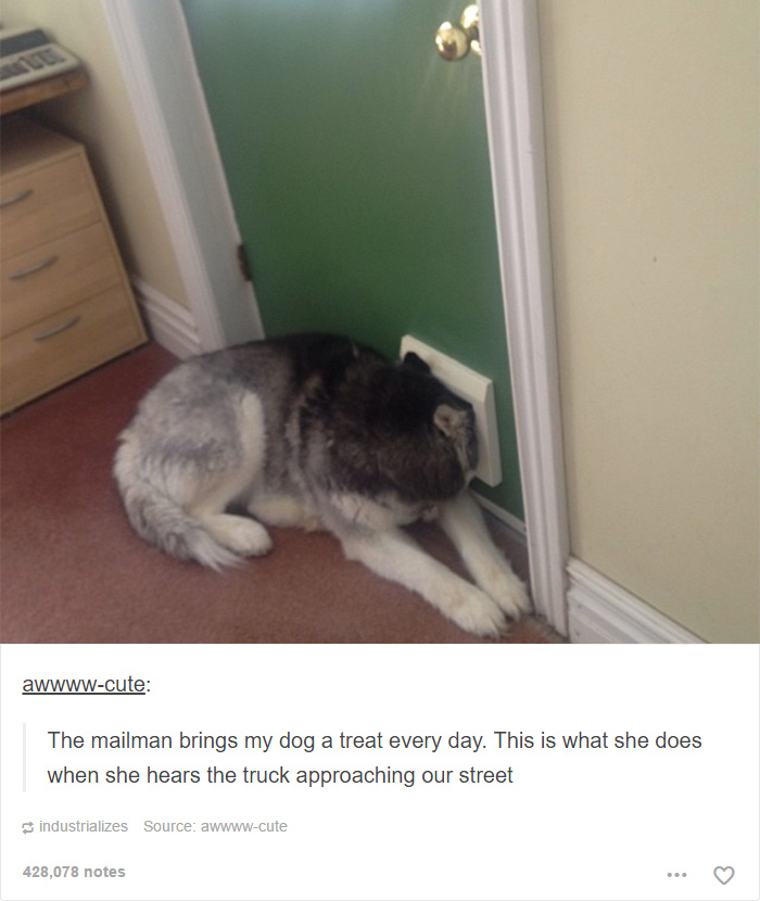 Funny Dogs