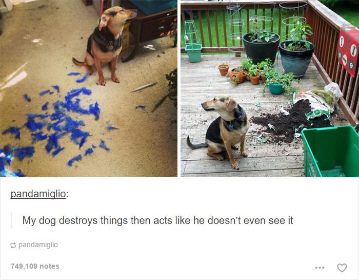 funny-tumblr-dogs-58-58131e9a65362__700.