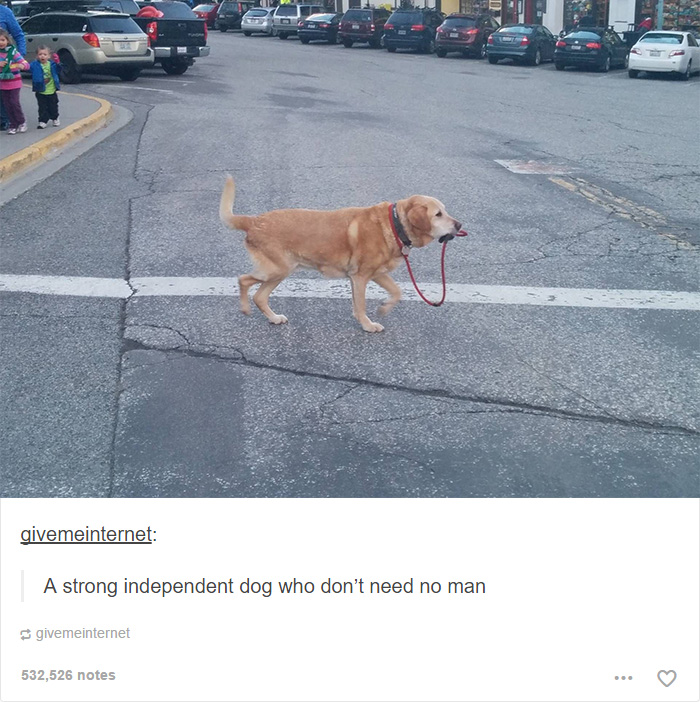 funny-tumblr-dogs-61-58131eb30a121__700.